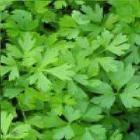 Росава семена петрушки листовой Moravoseed 25 г