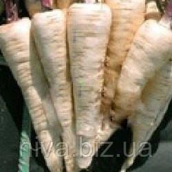 Камо семена пастернака корневого Moravoseed 250 г