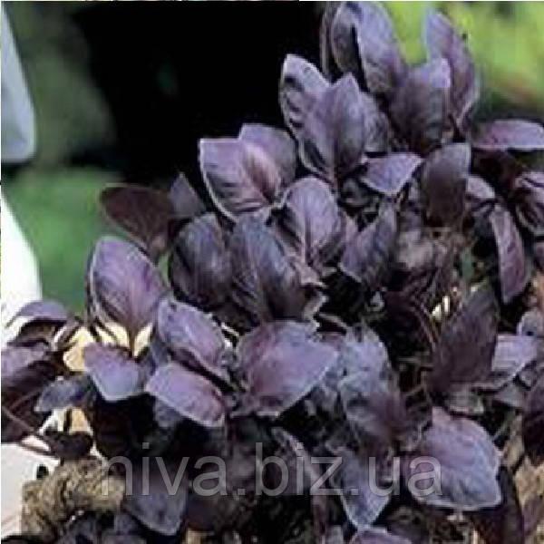 Ред Рубин семена базилика Semo 5 г