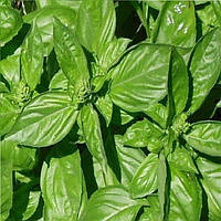 Геновезе семена базилика зеленого SAIS 50 г