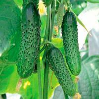 Барвина F1 семена огурца партенокарпического Nunhems 500 семян