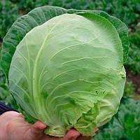 Оракл F1 семена капусты белокочанной ранней Clause 2 500 семян