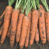 Бангор F1 семена моркови типа Берликум 1.6 - 1.8 мм Bejo 1 000 000 семян