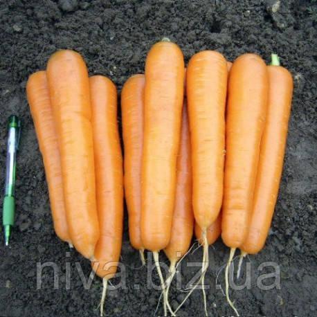 Аттилио F1 семена моркови нантской Vilmorin 100 000 семян