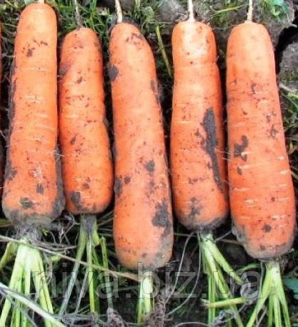 Грета F1 семена моркови Нантская lucky Seed 500 г