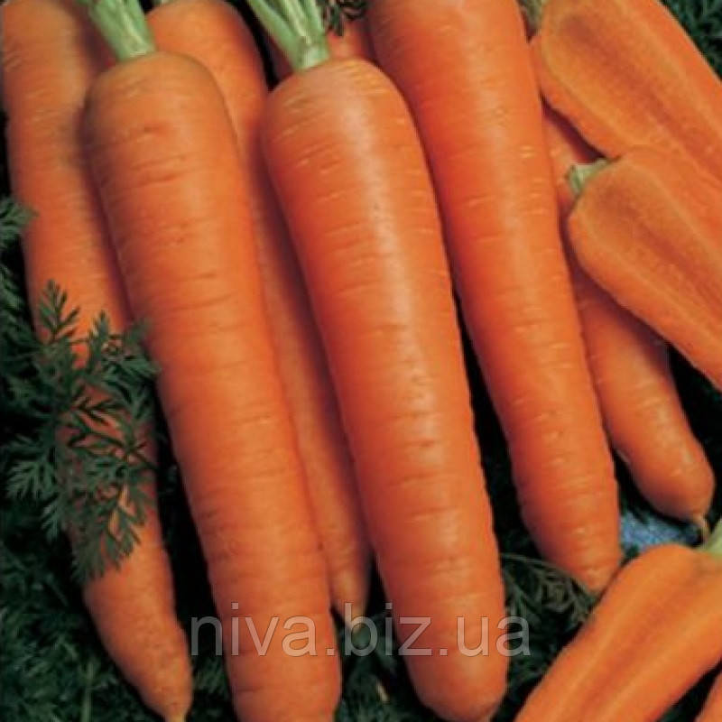Наполи F1 (Napoli F1) семена моркови Bejo 2.0 - 2.2 1 000 000 семян