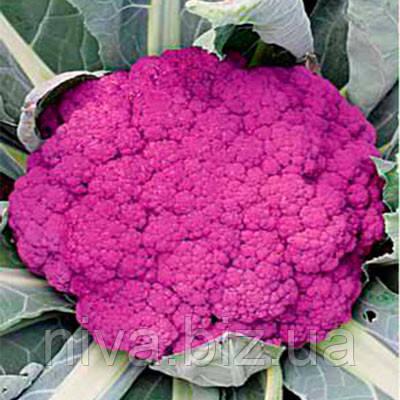 Пурпурная Сицилийская семена капусты цветной фиолетовой Euroseed 25 г