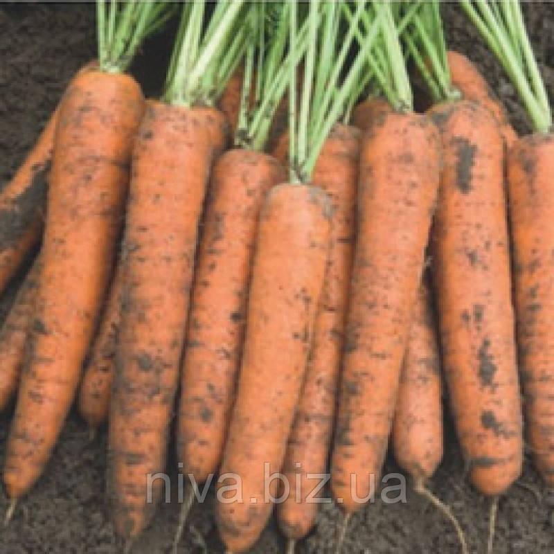 Бангор F1 семена моркови типа Берликум 1.6 - 1.8 мм Bejo 100 000 семян