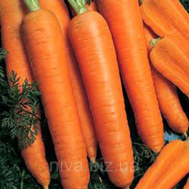 Камаран F1 (Kamaran F1) семена моркови Берликум 2.2 - 2.4 мм Bejo 1 000 000 семян