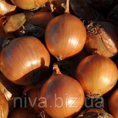 Манас F1 (Manas F1) precision seeds насіння цибулі ріпчастої Bejo 250 000 насінин
