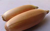 Тоска насіння цибулі ріпчастої довгого дня Moravoseed 1 000 г
