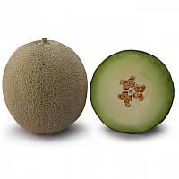 КС 7044 F1 насіння дині Kitano Seeds 1 000 насінин