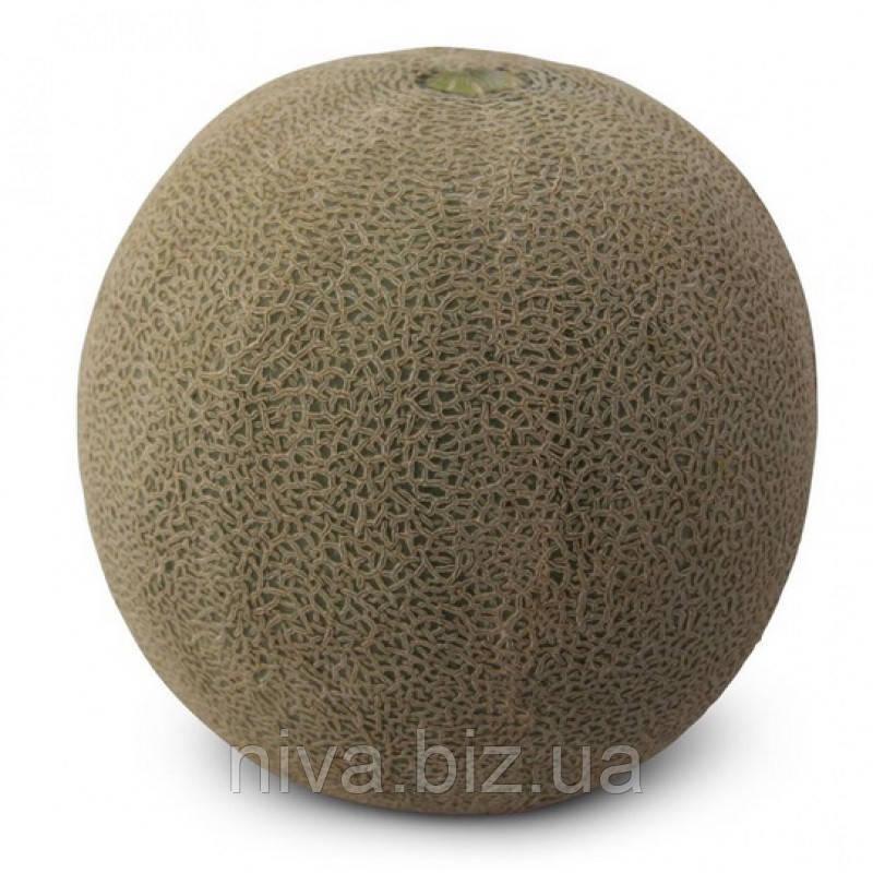 КС 7084 F1 насіння дині Kitano Seeds 100 насінин
