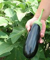 Шарапова F1 насіння баклажану Rijk Zwaan 1 000 насінин