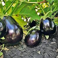 Шеріл F1 насіння баклажану Rijk Zwaan 1 000 насінин