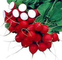 Сакса семена редиса Semenaoptom 250 г