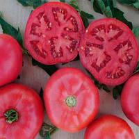 Пинк Буш F1 семена томата дет розового Sakata 25 семян