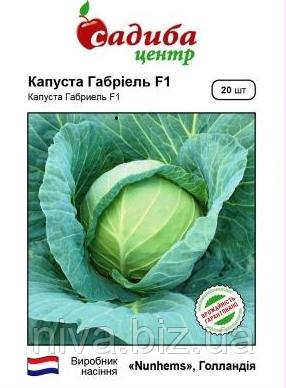 Габріель F1 насіння капусти б/к середньоранньої Садиба Nunhems 20 насінин