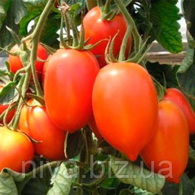 Колибри F1 семена томата индет. Clause 250 семян