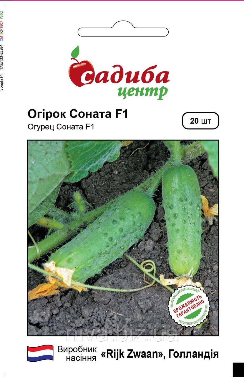 Соната F1 насіння огірка Садиба Центр Rijk Zwaan 20 семян