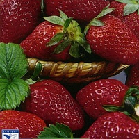 Али Баба семена земляники Hem Zaden 0.2 г