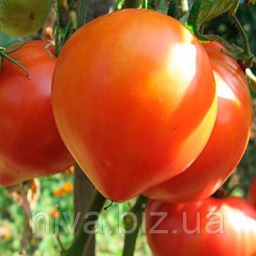 Абаканский розовый семена томата индет. Элитный ряд 250 г