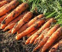 Ньюхол F1 (Newhall F1) семена моркови Нантес 1,8-2,0 мм Bejo 1 000 000 семян