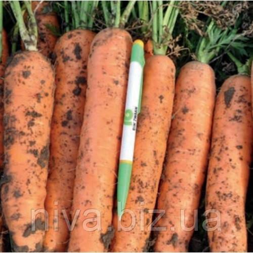 Норвалк F1 (Norwalk F1) семена моркови нантес 2,2 - 2,4 мм Bejo 1 000 000 семян