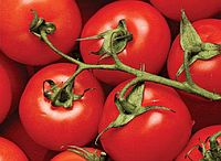 Дар Заволжья семена томата дет Элитный ряд 500 г