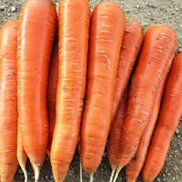 Афалон F1 семена моркови Нантской/Берликум Moravoseed 10 000 семян