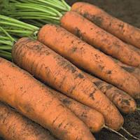 Белградо F1 (Belgrado F1) семена моркови типа Берликум 1.6 - 1.8 мм Bejo 100 000 семян