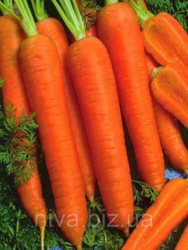 Канада F1 (Kanada F1) 1.8-2.0 мм семена моркови Bejo 5 000 семян