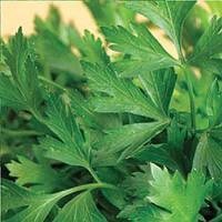 Гиганте Италия семена петрушки листовой SAIS 15 г