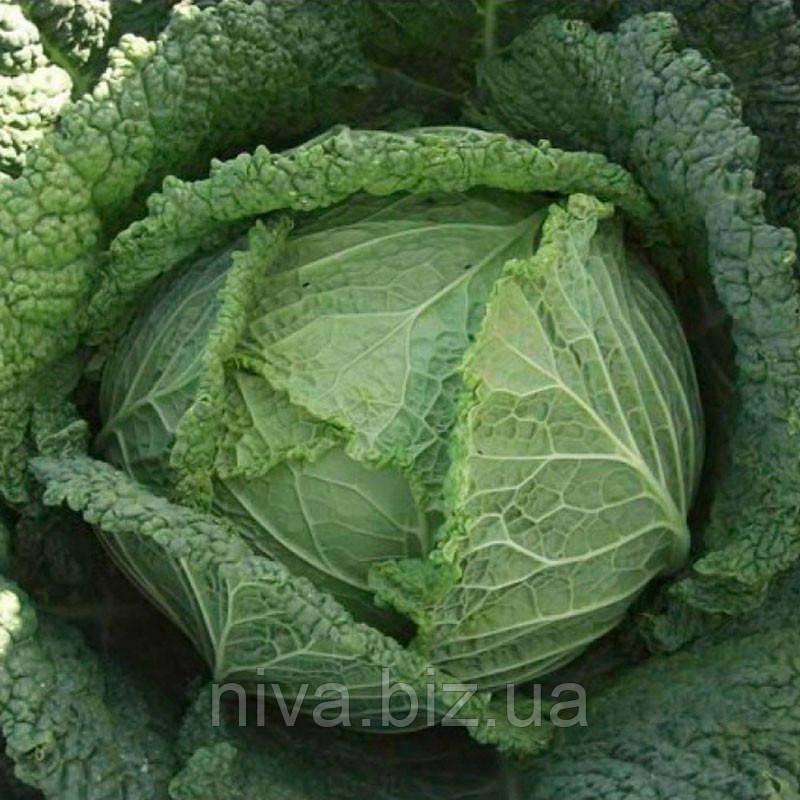Мелиса F1 (Melissa F1) семена капусты савойской Bejo 100 семян
