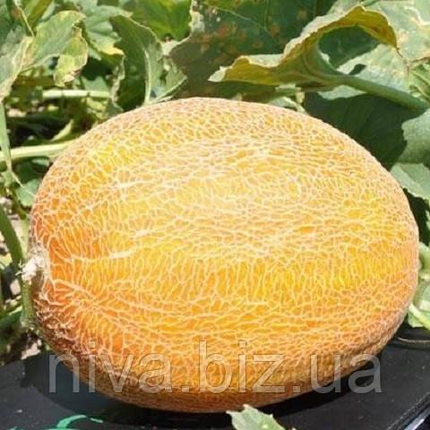 Мейрон F1 насіння дині типу Ананас Hazera 25 насінин