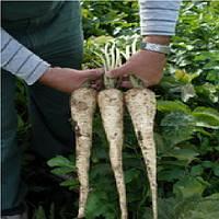 Длинный Белый семена пастернака Semo 10 г