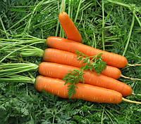 Каротина семена моркови Semo 50 г