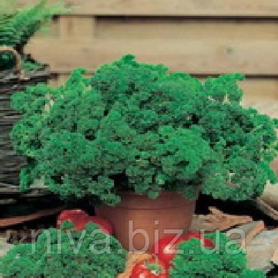 Кадерава семена петрушки листовой Semo 500 г