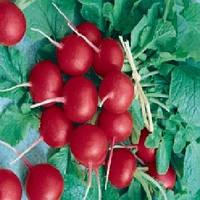 Примара F1 семена редиса Semo 5 000 семян