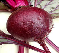 Болтарді насіння буряка столового округлого середньораннього 90-110 днів Syngenta 100 000 насінин
