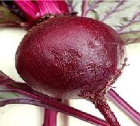 Болтарди семена свеклы столовой среднеранний 90-110 дн Syngenta 100 000 семян