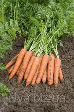 Берлин F1 семена моркови Берликум PR 2,0-2,2 мм среднеспелый 113 дн Bejo 1 000 000 семян