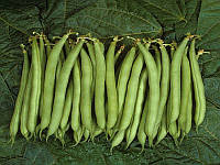 Палома семена фасоли спаржевой Nunhems 5 000 семян