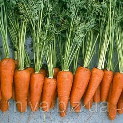 Ред Коред F1 морковь сортотип Шантане Lark Seeds 25 г