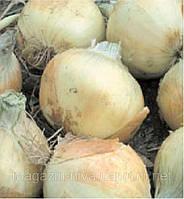 Вольф F1 насіння цибулі озимої ріпчастої Hazera 5 000 насінин