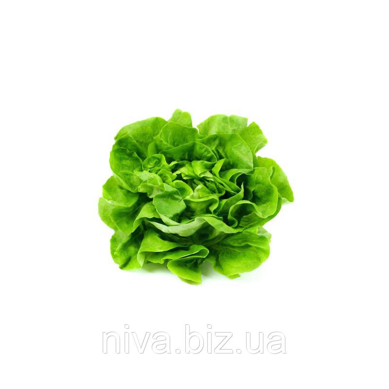 Максимус семена салата дражированые Rijk Zwaan 1 000 драже