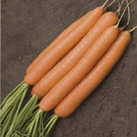 Джерада F1 семена моркови калибр от 1,6 мм селекция RZ Rijk Zwaan 100 000 семян