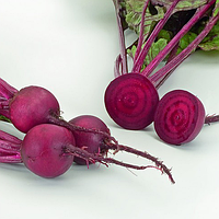 Ліберо (Libero) насіння буряка столового округлого ранньостиглого 70-90 днів Rijk Zwaan 100 000 насінин