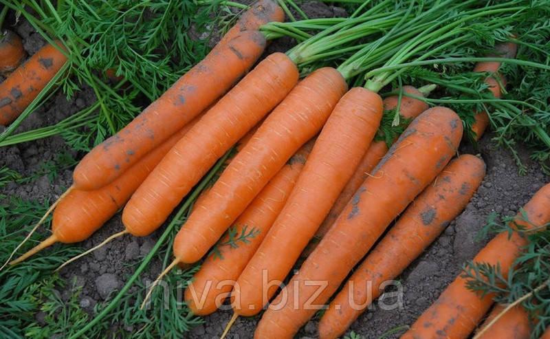 Сатурно F1 семена моркови Нантская Clause 25 000 семян