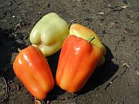 Боярд F1 (Талисман F1) семена перца сладкого Lucky Seed 100 семян